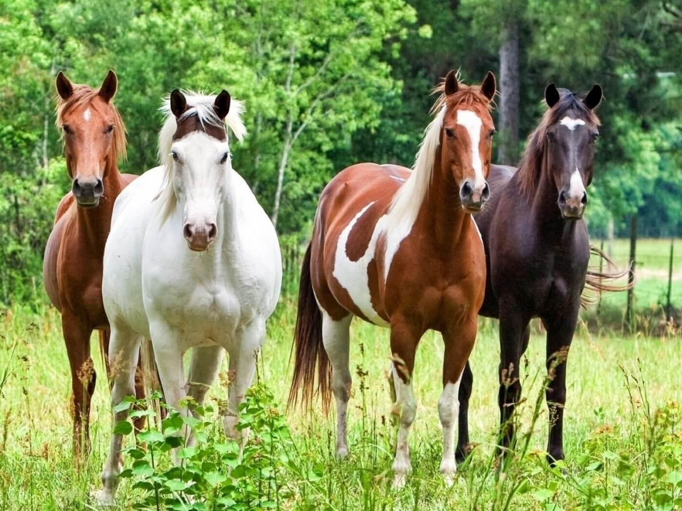 Субсидия на возмещение части затрат на развитие мараловодства и мясного табунного коневодства.