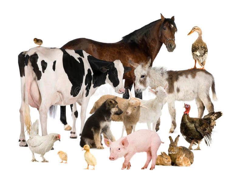 Какие субсидии предусмотрены на развитие животноводства в 2020 году?