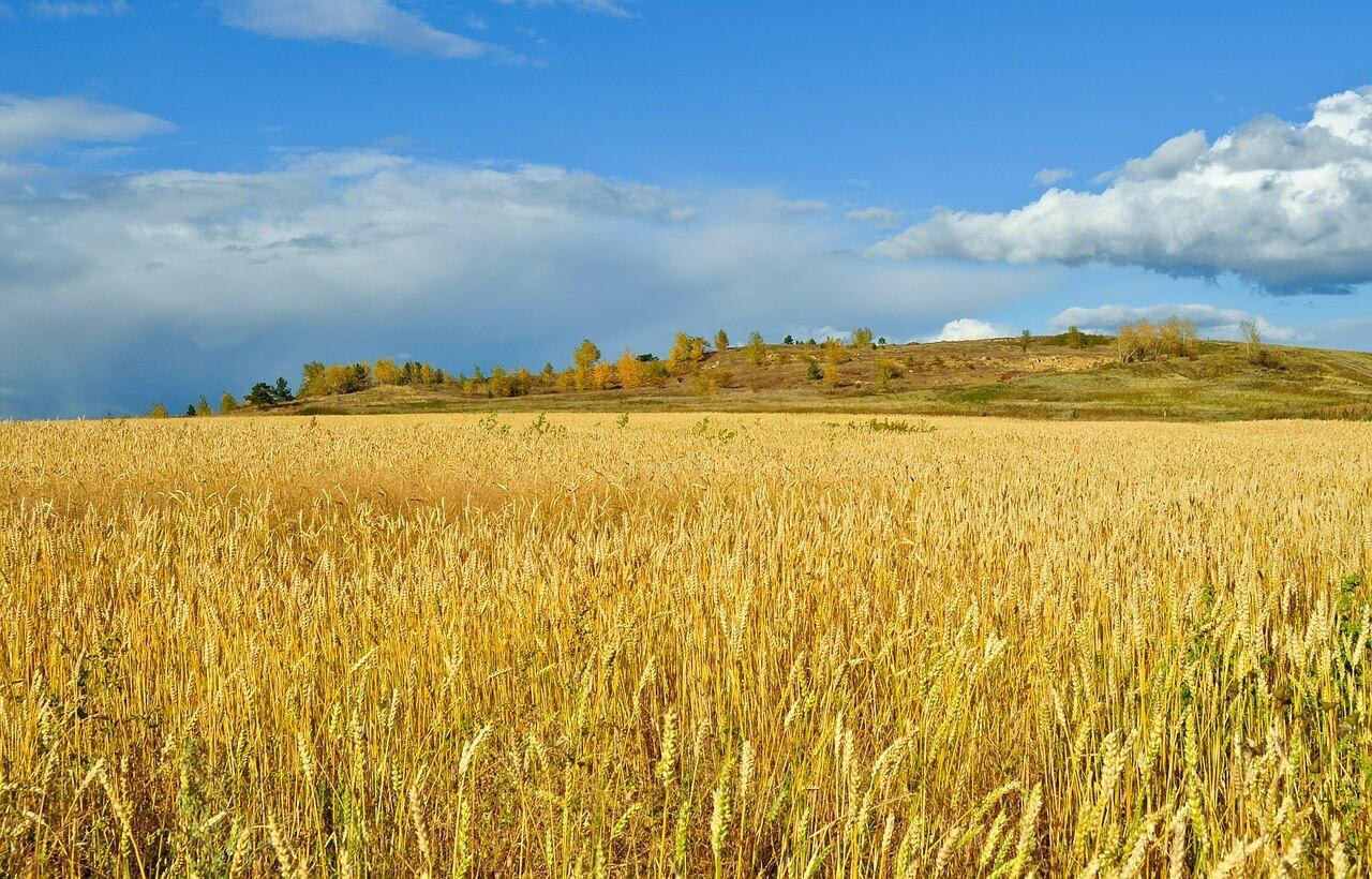 Перспективы развития отрасли растениеводства