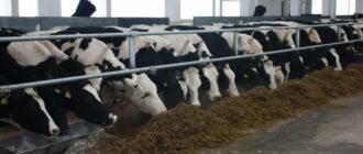 Молочно-товарная ферма для крестьянских фермерских хозяйств