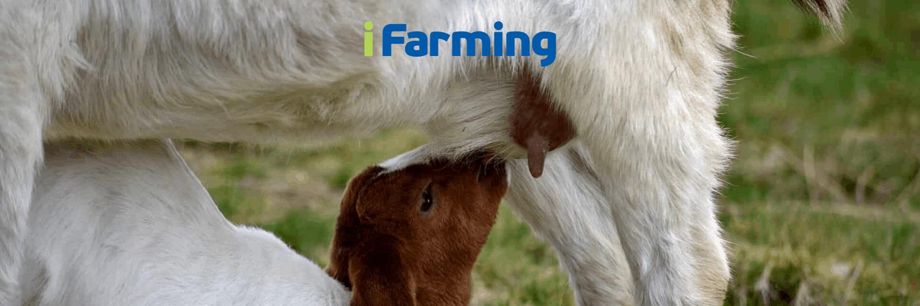 Программа выращивания козлят на козоводческих фермах и комплексах