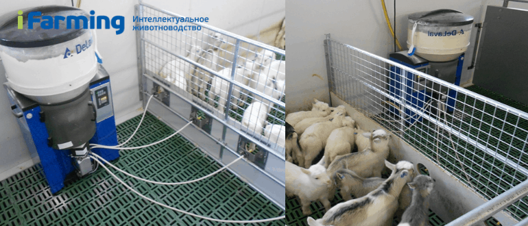 Автоматическая станция выпойки козлят