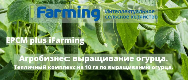 Сельскохозяйственный бизнес по выращиванию и реализации овощей закрытого грунта под ключ