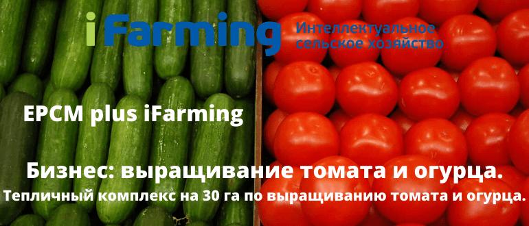 Сельскохозяйственный бизнес по выращиванию и реализации овощей закрытого грунта