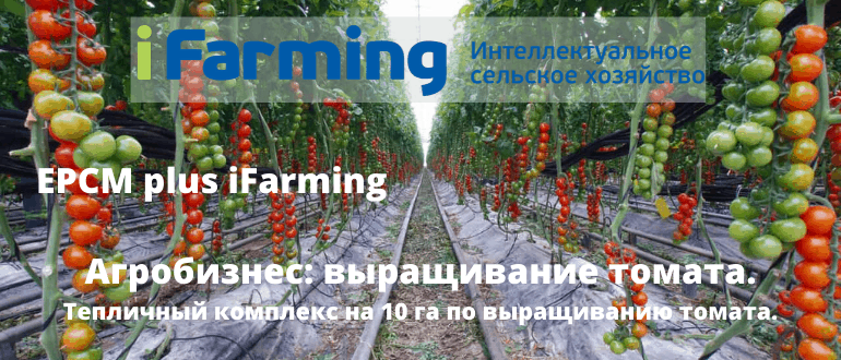 Строительство тепличного комплекса по выращиванию томата на площади 10 га