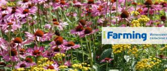 Бизнес по выращиванию лекарственных растений