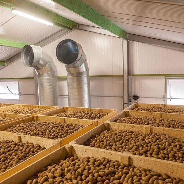 Проект по выращиванию и хранению картофеля и других овощей открытого грунта