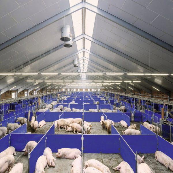 Проект свиноводческой фермы